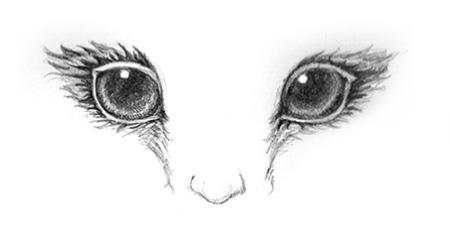 lady_owl-eyes
